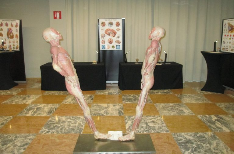 THE BODY EXHIBITION
